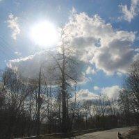 За солнышком вдогонку... :: Tatiana Markova