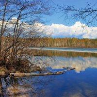 Мелодией апрельской синевы... :: Лесо-Вед (Баранов)