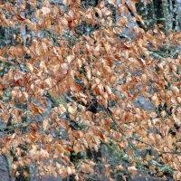 Зимний шелест листьев. :: Olga Grushko