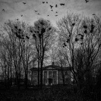 Птицы :: Алексадр Мякшин