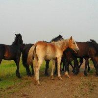 Просто кони. :: nadyasilyuk Вознюк