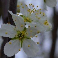 Весна... :: Наталья Петракова