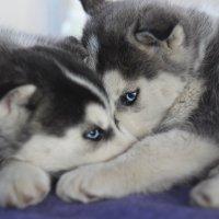 лед в их глазах... :: Юлианна