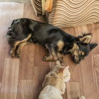 Спят усталые игрушки... :: Виктор Куприянов