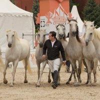 Хорошее отношение к лошадям :: Nina Grishina