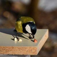 леское застолье :: linnud