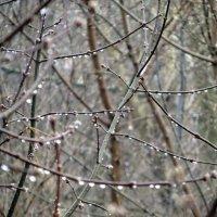 Апрельский дождь.Весь день идет. :: Елизавета Успенская