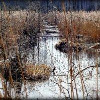 весенние воды :: Александр Прокудин