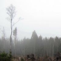 Утро туманное :: veera (veerra)