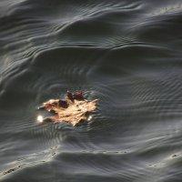 Ненадежное плавание :: Андрей Лукьянов