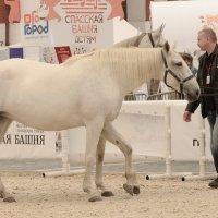 Сколько лошадей? :: Nina Grishina