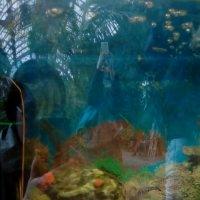Аквариумные рыбки. :: Светлана Калмыкова