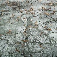 Уход зимы. :: Андрий Майковский