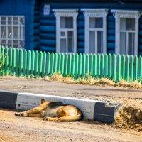 Хорошо в деревне летом :: Андрей Куприянов
