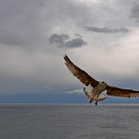 Раскинулось море широко... :: Александр Бойко