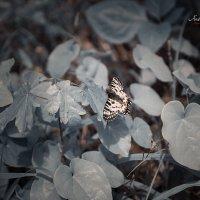 Бабочка :: Андрей Володин