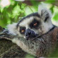 Устал я однако...Мадагаскар! :: Александр Вивчарик