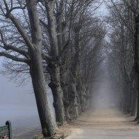 Про туман.... :: Юрий Цыплятников