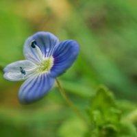 Малюсенький цветок :: Андрей Майоров