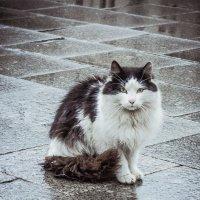 Кошка. :: Евгения Назарова