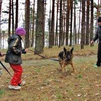 Перетягивание собаки :: Николай Котко