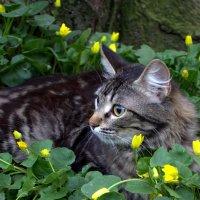Апрельская кошка :: оксана косатенко