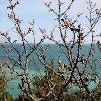 Весна в Крыму :: Татьяна Старчикова