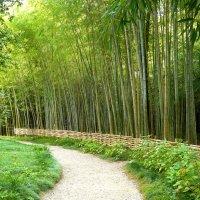 ботанический сад, бамбук :: Леонид Натапов