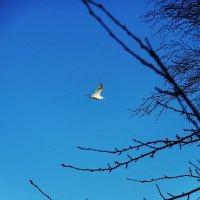 Чайка над морем :: Маргарита Батырева