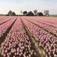Весна в Голландии :: Vasilii Pozdeev