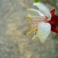Белый цветок :: Ирина Мищенко