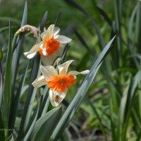 Запах весны. :: Anna Gornostayeva