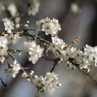 весна!!!!! :: Марина Брюховецкая