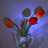 Весна шагает по планете :: Юрий Гайворонский