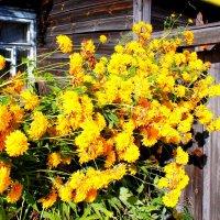 Летние дни в деревне :: Катя Бокова