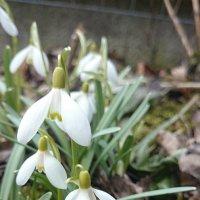 Весна идёт!  Весне дорогу! :: Galina194701