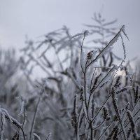 Атака снежного богомола))) :: Юрий Клишин