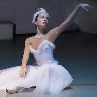 Балет :: Наталья Каравай