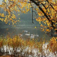 Осенняя идиллия :: Маргарита Батырева
