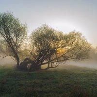 Спящее дерево :: Сергей Корнев
