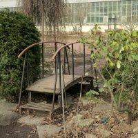 В Ботаническом саду. :: Валентина Жукова