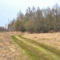 Зазеленела дорога полевая :: Милешкин Владимир Алексеевич