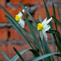 Весенние цветы. :: владимир