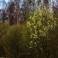 Весна у дороги :: Юрий