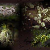 Весна :: Владимир Кроливец