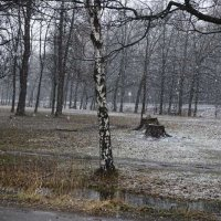 В преддверии весны :: galina bronnikova