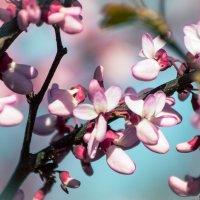 Весна... Я опять иду гулять... :: Nyusha