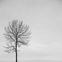 зима... тишь и одиночества :: Светлана Салахетдинова
