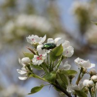 Весна! :: Леонид Марголис