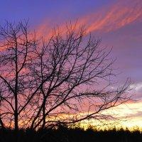 Розовый ветер заката :: Николай Масляев